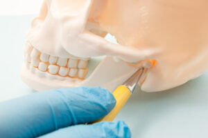A gloved finger uses a yellow pointer to indicate the TMJ on a fake skull